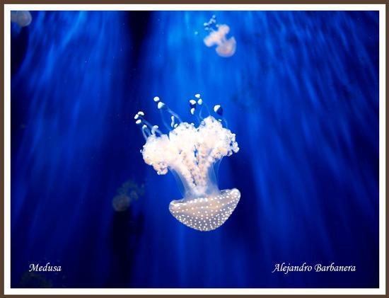 Bella medusa - Genova (1603 clic)
