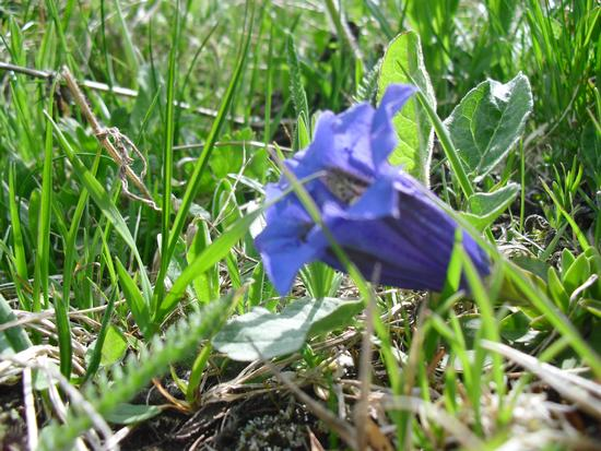 Flower's purity - Rocca pietore (900 clic)