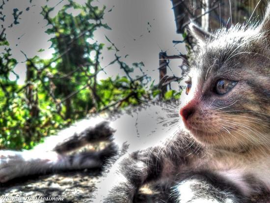 Il gatto al sole - Paduli (1395 clic)