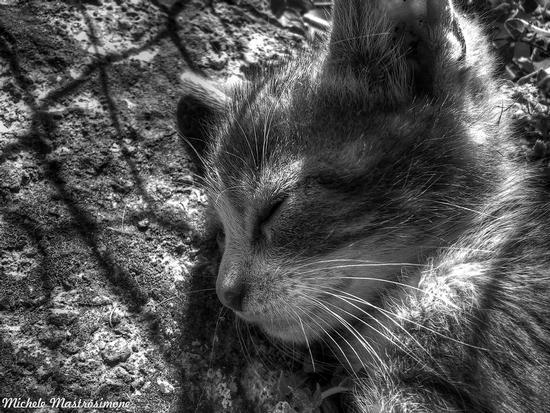 Il sonno del gatto - Paduli (1311 clic)