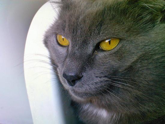 Occhi di gatto - PADULI - inserita il 20-Jun-12
