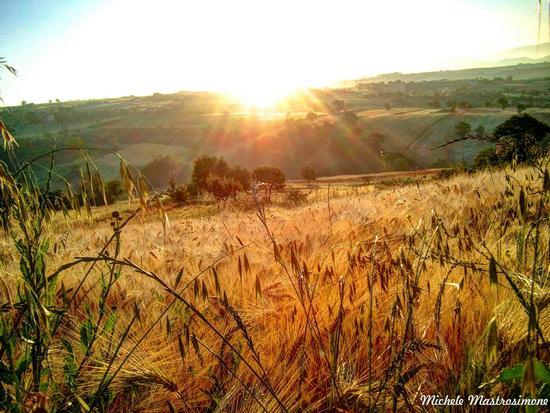 Alba sul campo di grano - Paduli (3077 clic)