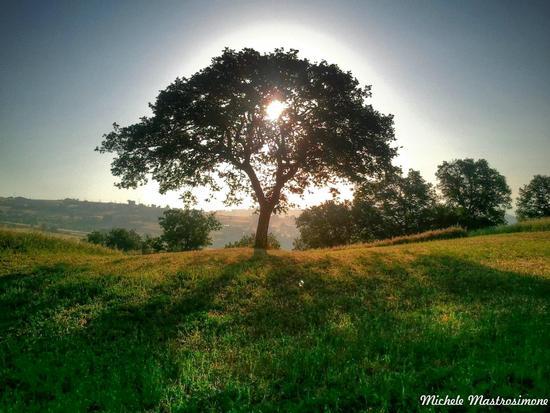 Sole dietro l'albero - Paduli (3166 clic)