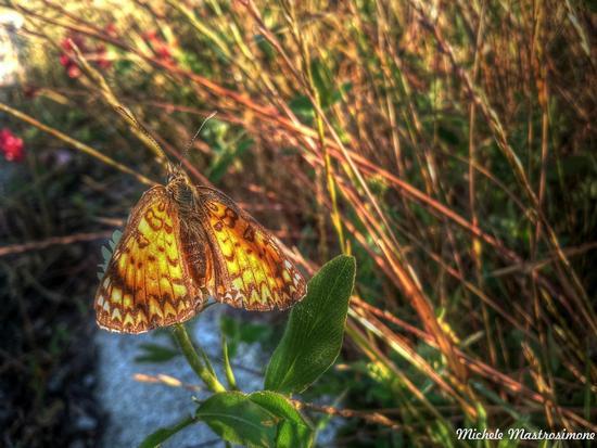 Farfalla - Paduli (1400 clic)