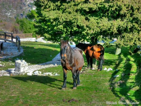 WIld Horses - Cerreto sannita (1442 clic)