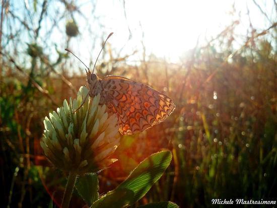 Farfalla sul fiore - Paduli (1485 clic)