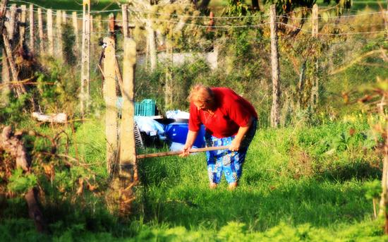Lavorando nei campi - Cascina (1369 clic)