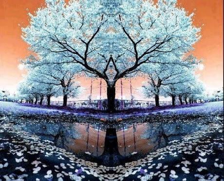 Creazione - Avane (1374 clic)