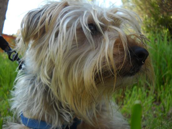 Il mio cucciolo - Navacchio (1344 clic)
