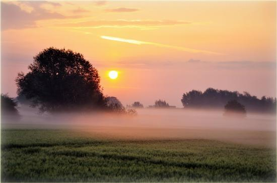 Il sole si abbassa - Coltano (2001 clic)