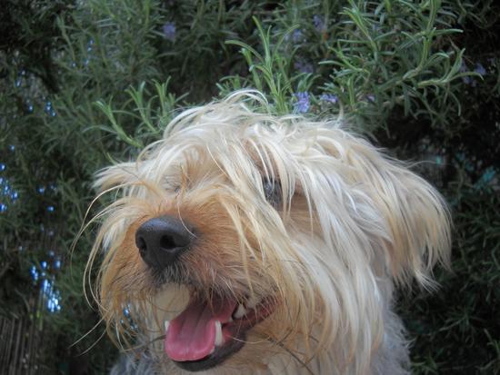 Il mio cucciolo - CASCINA - inserita il 19-Oct-12
