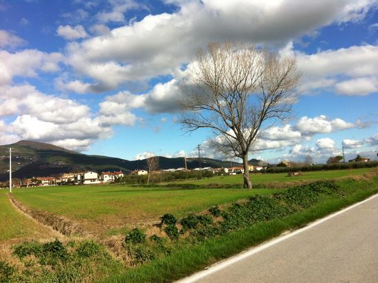 Bella giornata - Cascina (1091 clic)