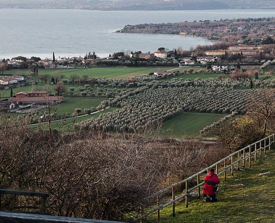 Dalla Rocca di Manerba del Garda (696 clic)