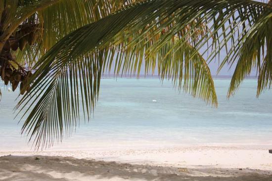 Sotto le palme delle Maldive (432 clic)