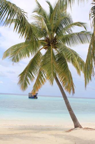 Palma alle Maldive (365 clic)