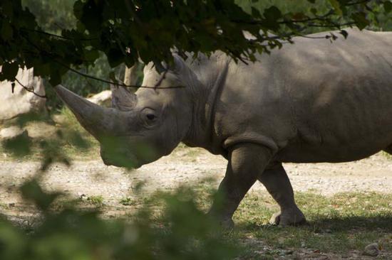 Rinoceronte - Bussolengo (1094 clic)
