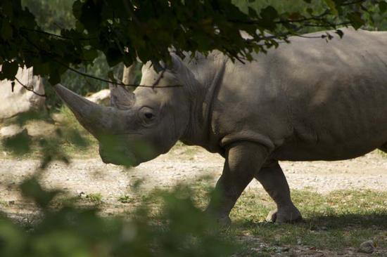 Rinoceronte - BUSSOLENGO - inserita il 04-Sep-12