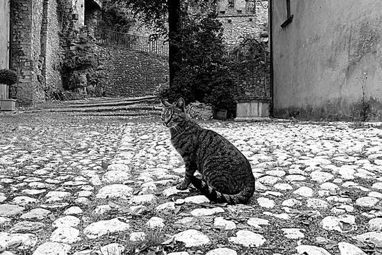 il gatto che ....posa.  - Collalto sabino (1241 clic)