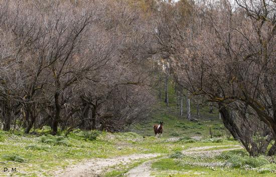 Foresta autunnale - Lago nicoletti (635 clic)