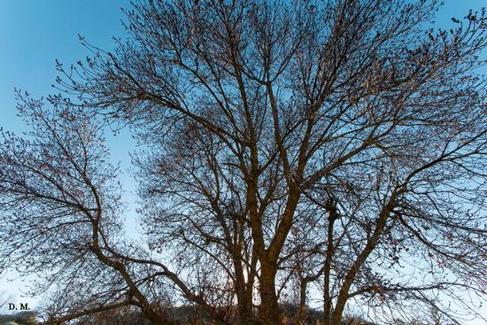 L'albero  - Lago di pergusa (564 clic)