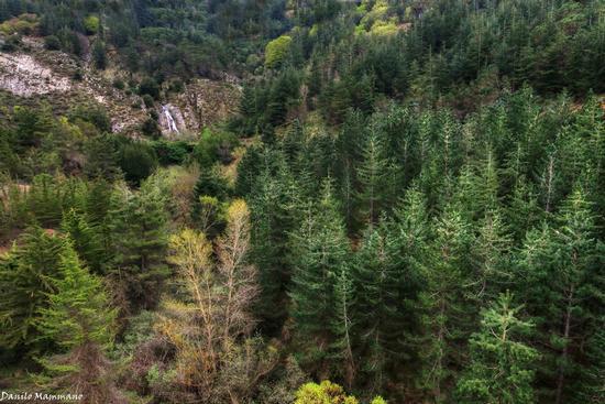 Sopra un tappeto di alberi - Piano battaglia (606 clic)