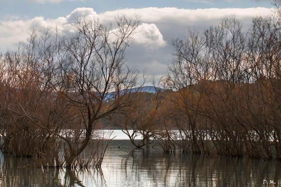 Autunno al lago - Lago nicoletti (551 clic)
