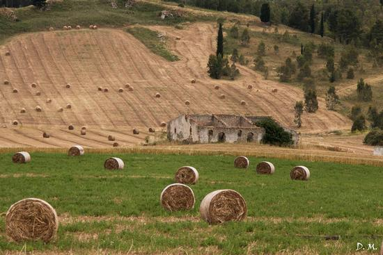 Fine trebbiatura - Caltanissetta (532 clic)
