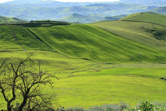 Verdi colline - Caltanissetta (5728 clic)