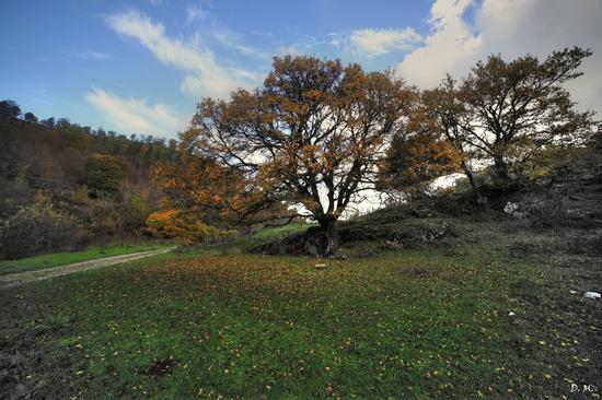 Autunno nel Parco dei Nebrodi (572 clic)