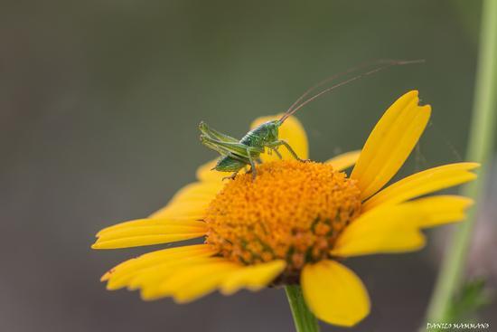 Saltando da un fiore all'altro - Caltanissetta (1027 clic)