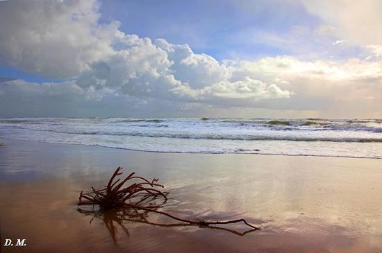 Il mare d'inverno. - Falconara (567 clic)