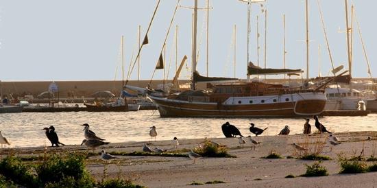 Gabbiani al porto - Licata (1845 clic)