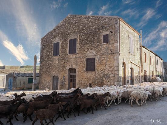 Il grande esodo verso l'ovile - Caltanissetta (4831 clic)