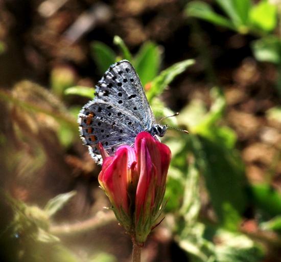 Natura - Resuttano (3111 clic)