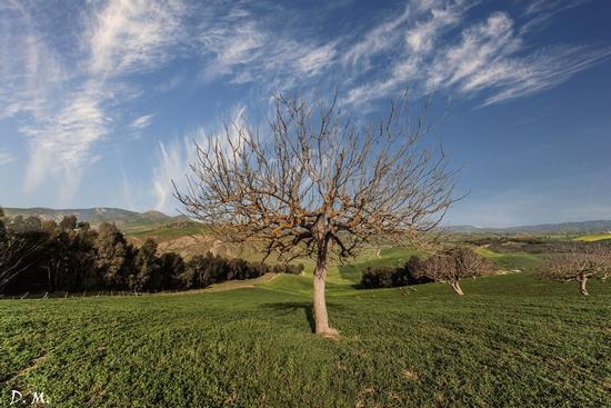 L'albero  - San cataldo (513 clic)