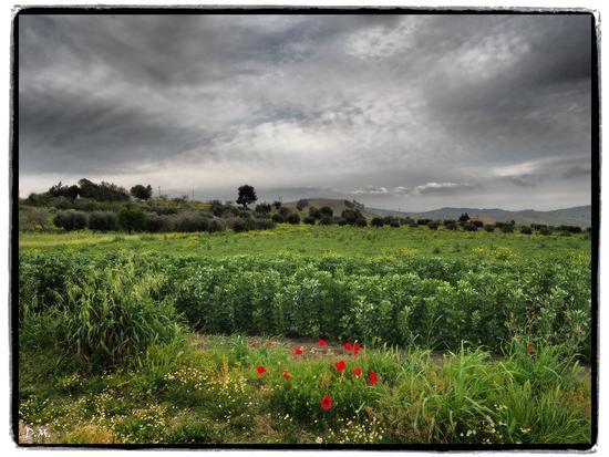 PRIMAVERA  - Caltanissetta (374 clic)