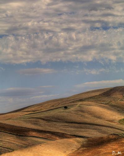 Paesaggio Siciliano - Assoro (730 clic)
