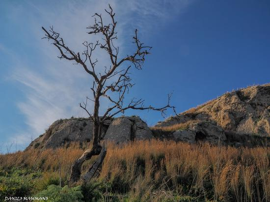 L'albero Morto (339 clic)