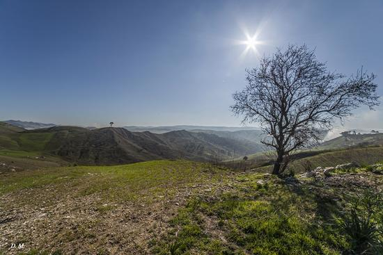 Giornata soleggiata - Caltanissetta (795 clic)