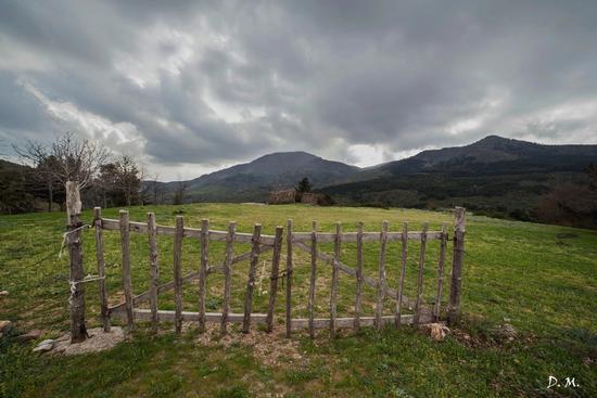 Giornata uggiosa al parco delle Madonie - Piano zucchi (701 clic)