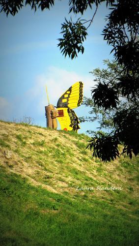 la collina delle farfalle - Ancona (1615 clic)