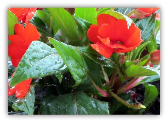 dopo la pioggia - Camerano (985 clic)