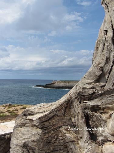 scorci... - Lampedusa (1747 clic)