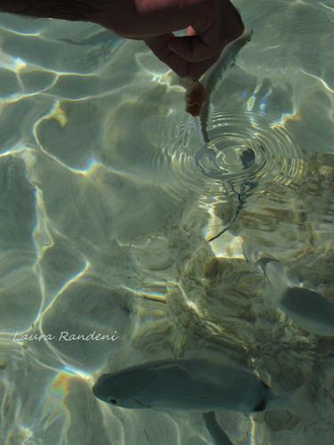 vita subacquea - Lampedusa (1987 clic)
