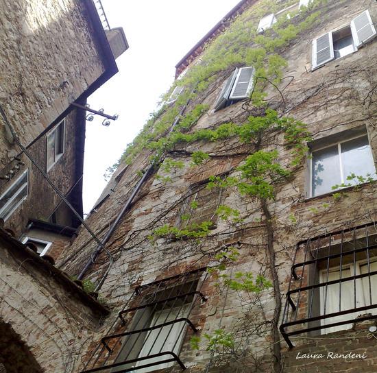 centro storico - Perugia (1464 clic)