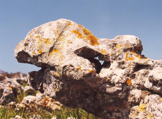 Testa naturale di pietra (720 clic)