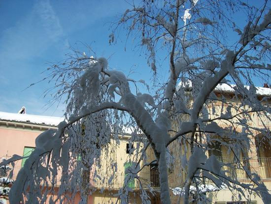 Cereseto Monferrato sotto la neve (896 clic)
