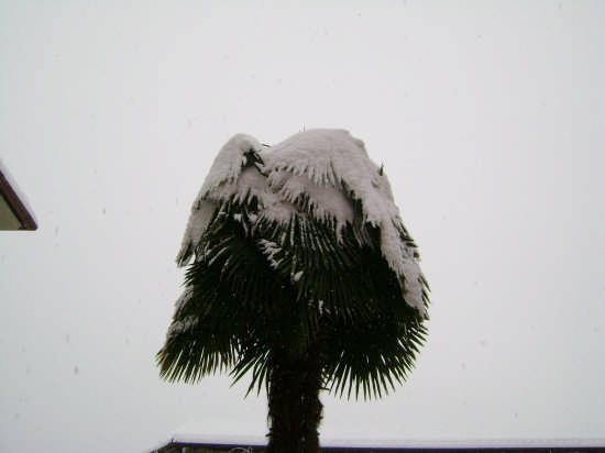 Cereseto - Neve Gennaio 2008 (1598 clic)
