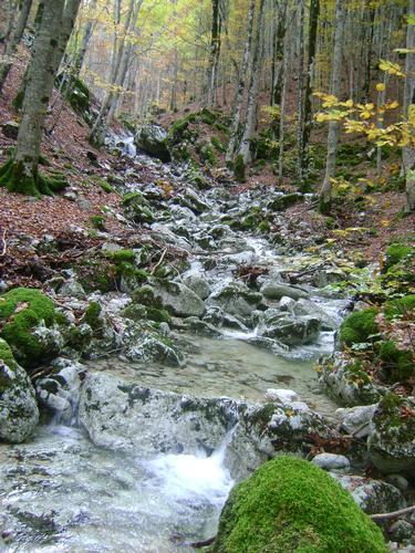 Ruscello @ Parco Naturale Zompo lo Schioppo, Morino, Abbruzzo (1728 clic)