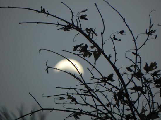 luna  -  - inserita il 25-Oct-12